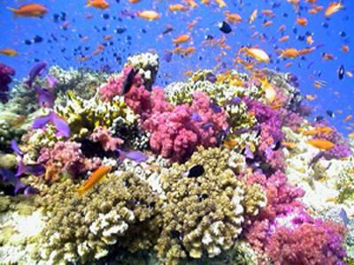 Odborníci potvrdili odhalení nejhlubšího korálového útesu ve Spojených státech. Nachází se u floridského pobřeží v oblasti nazvané Pulley Ridge v hloubce 76,2 metrů. Je téměř 5 kilometrů široký a 32 km dlouhý.