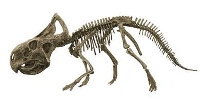 Paleontologové přehodnocují své dosavadní teorie! V Číně byly nalezeny více než 130 milionů let staré pozůstatky savce, který požíral dinosaury.