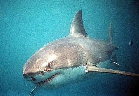 Australská firma SeaChange vyvinula speciální elektronické zařízení pro potápěče a surfaře, které by je mělo ochránit před útokem žraloka.