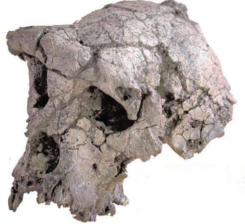 Antropologové z celého světa se přou nad nálezem z centrální Afriky. Tajemný Toumai, starý až neuvěřitelných 7 milionů let, má být údajně předchůdcem dnešního člověka!