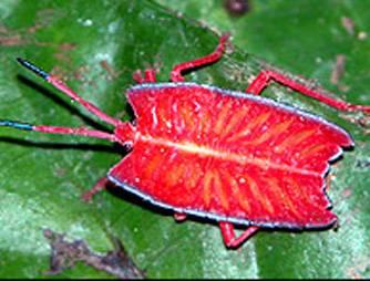 Přes 360 nových druhů unikátních rostlin a živočichů bylo objeveno na indonéském ostrově Borneo za posledních deset let.