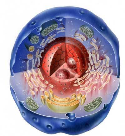 Ve všech buňkách našeho těla se každou sekundu odehrává nesčetné množství chemických reakcí. Jak se však dostanou živiny a jiné látky až dovnitř buněk? A jakým způsobem se buňky naopak zbavují zplodin?