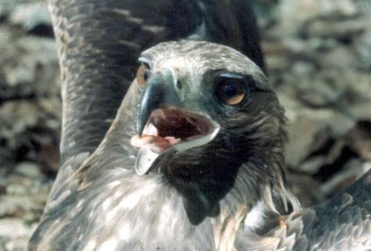 Američtí vědci z Purdue University vyvinuli pro monitorování ptačí populace speciální neinvazivní metodu analýzy DNA, kterou nyní poprvé použili.