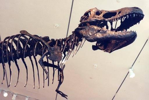 Z poslední studie amerických paleontologů vyplývá, že respirační systém dinosaurů měl mnoho shodných znaků s tím, který se nachází u dnešních ptáků.