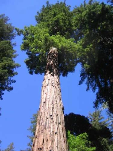S dřevinami, vytrvalými rostlinami se zdřevnatělými stonky, se setkáváme na každém kroku. Právě nyní o prázdninách a dovolených máme nejvíce příležitostí je poznat blíže. Co o nich vlastně víme?
