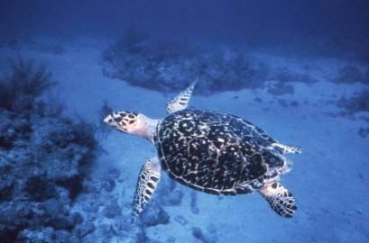 Vědecká expedice, která posledních 14 dní zkoumala mořské dno Mindanajského moře poblíž Filipín, oznámila, že objevila několik dosud neznámých živočišných druhů. Jedná se o hvězdice, korýše, ale i o mlže nebo ryby.
