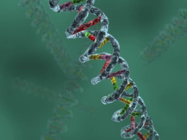 Vědci z Ohio State University vyvinuli proces, díky kterému mohou řetězit dlouhé úseky DNA a skládat je do přesných obrazců.