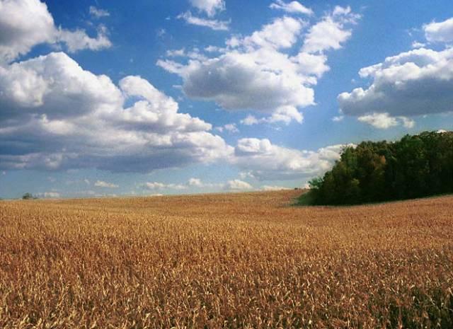 Odborníci spočítali, že výroba etanolu z rostlinných pletiv vyžaduje o 95 % méně fosilních paliv než produkce benzinu přímo z ropy.