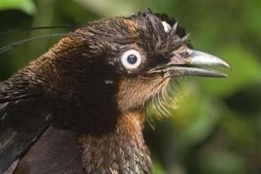Vědci v indonéské džungli nalezli nedostupnou lokalitu plnou neznámých druhů.