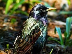 Za kus žvance se i zpěvný pták naučí rozeznávat větnou skladbu.