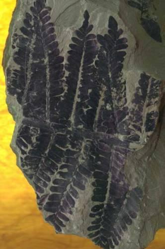 Za kolébku pozemských rostlin je dnes obecně považováno paleozoikum, neboli prvohory. Samotné slovo paleozoikum, znamená vlastně dávný život a odpovídá bouřlivému období ve vývoji Země, kdy nastala exploze všech životních forem.