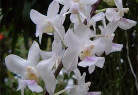 Orchideje se při opylování nespoléhají jen na konvenční postupy.