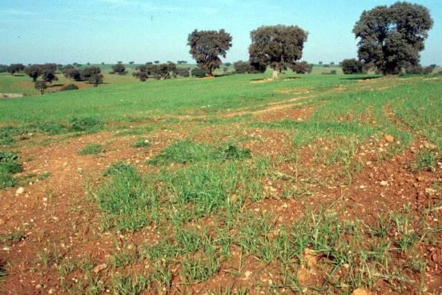 Světový fond na ochranu přírody upozornil na to, že pokud se nezmění systém zemědělství ve Středomoří, hrozí tamní oblasti fatální nedostatek vody.