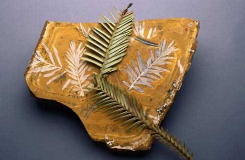 Za největší botanický objev (nejen) tohoto století označují odborníci nález živého majestátního jehličnanu nazvaného Wollemi Nobilis (Wolemie vznešená). Živou botanickou fosilii, která pamatuje dinosaury, nedávno doprovodil do Prahy její objevitel David Noble. 21. STOLETÍ bylo u toho.