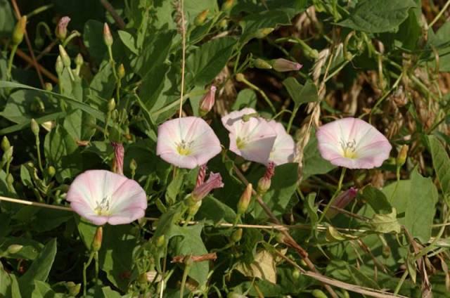 Krása rostlin může někdy skrývat jedovatou hrozbu! Máme se jich bát? Odborníci je dokážou využívat k účinné léčbě. Stále se objevují nové možnosti využití darů přírody.