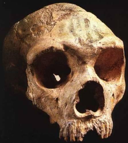 V srpnu uběhne 150 let od nálezu zvláštní kostry v jedné z jeskyní Neanderova údolí u německého Düsseldorfu. Objev vyvolal bouřlivou diskusi a mnohaleté vědecké spory. Skoro půl století trvalo, než se svět s existencí neandertálců definitivně smířil.