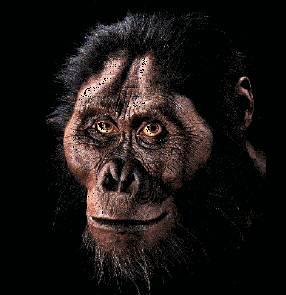 Antropologové po více než 30 letech hledání našli zachovalou kostru dítěte stejného druhu, k jakému patřila i legendární Lucy - Australopithecus afarensis.