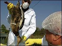 Virus H5N1 se objevil v nové a dosud neznámé formě.