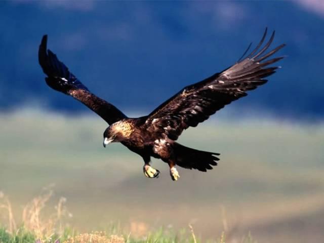 Jejich obětí se stalo více než deset přísně chráněných orlů mořských.