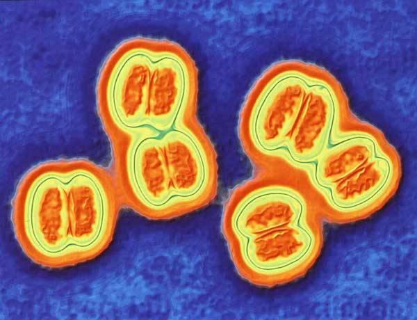 Jen málokterá bakterie je tak zákeřná. V průměru každá devátá napadená oběť nepřežije její bleskurychlý útok! Za své oběti si přitom nejraději vybírá malé děti a mladé lidi. Naštěstí se jí může postavit do cesty očkování. Od příštího roku se má navíc objevit velmi účinná vakcína.