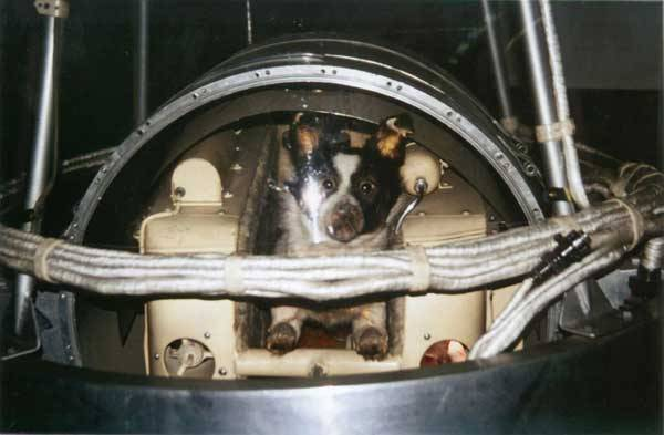 Skutečně prvními průkopníky na cestě do vesmíru byla laboratorní zvířata, bez nichž by si počátky kosmonautiky vyžádaly mnohem víc obětí.