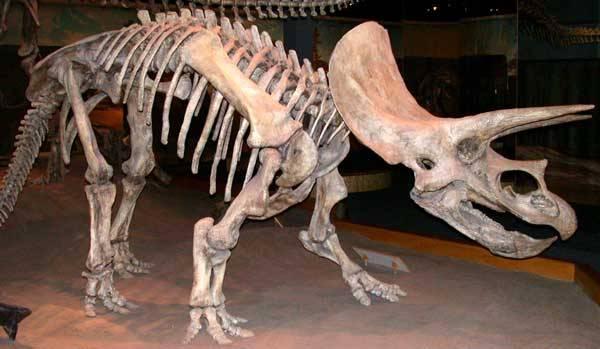 Nejnovější objevy z Číny nyní posunuly dobu vzniku rohatých dinosaurů o další miliony let do historie. Ukazují, jak krutý byl zápas pravěkých gigantů a jakými děsivými zbraněmi je příroda vyzbrojila.