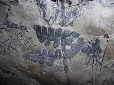 Američané objevili zkamenělé zbytky jednoho z nejstarší pralesů na Zemi.