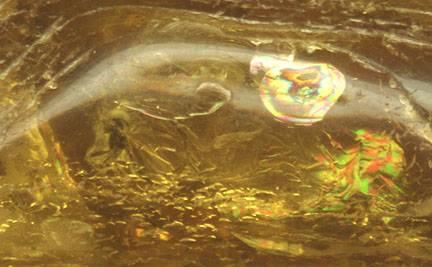 Fosílie houby spočívala v kusu jantaru.