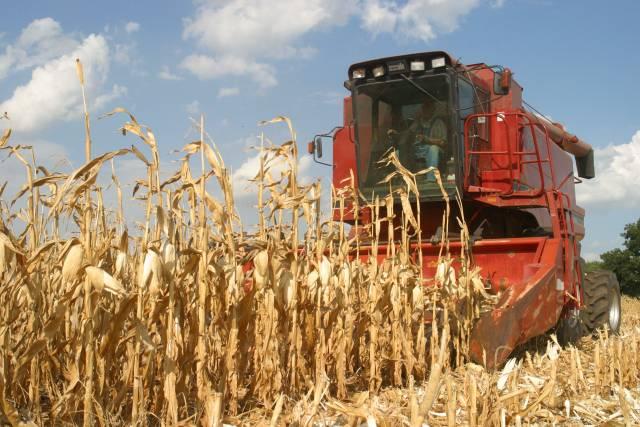 Boom výroby etanolu může ohrozit americkou produkci krmivářské a potravinové kukuřice.