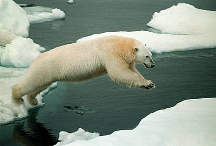 Ruští vědci oznámili, že jejich země si může činit nároky na rozsáhlé arktické území.