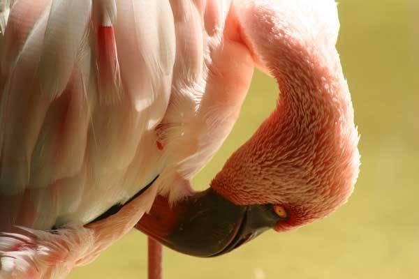 Ptačí peří fascinuje vědce i konstruktéry odedávna jako dokonalý výrobek přírody. Jak ale dnes vypadají nejnovější výsledky jeho zkoumání? V tomto ohledu se máme stále od ptáků co učit.