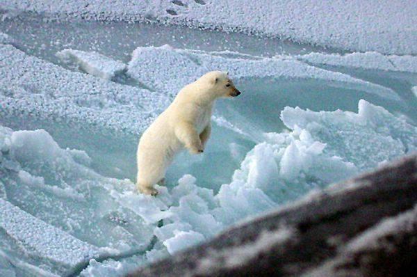 Do bitvy o přírodní zdroje, nacházející se kolem oblasti severního pólu, se vložily další státy.