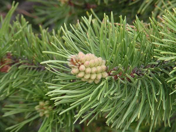 Dovolené a prázdniny jsou ideálním časem pro poznávání tuzemských i cizokrajných dřevin. I proto se dnes 21. STOLETÍ zaměřilo právě na ně.