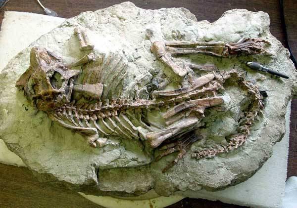 I vědci jsou jen lidé. Bují mezi nimi konflikty, které velmi snadno mohou přesáhnout do osobní roviny. Jeden takový, týkající se objevu dinosaurů, se odehrál koncem 19. století ve Spojených státech.