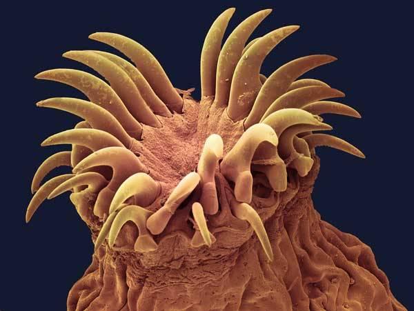 Svět parazitů je naprosto fascinující, plný tajemných zvyklostí a neuvěřitelných schopností. V životě tvorů, jejichž prostředím je živé tělo někoho jiného, platí naprosto odlišná pravidla, než na jaké jsme zvyklí z našeho světa. Přestože si jich každý z nás denně ve svém těle nosí miliony do autobusu, do krámu i do postele, jsou jako z jiného vesmíru.