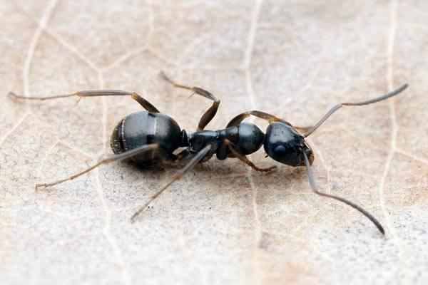 To, že hmyz je velmi dobře přizpůsobivý, je všeobecně dobře známá věc. Prim však v adaptabilitě nehraje nikdo jiný než mravenci.