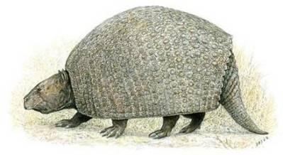 Na území dnešních chilských And byly objeveny 18 milionů let staré zkameněliny zvířat příbuzných dnešním pásovcům.