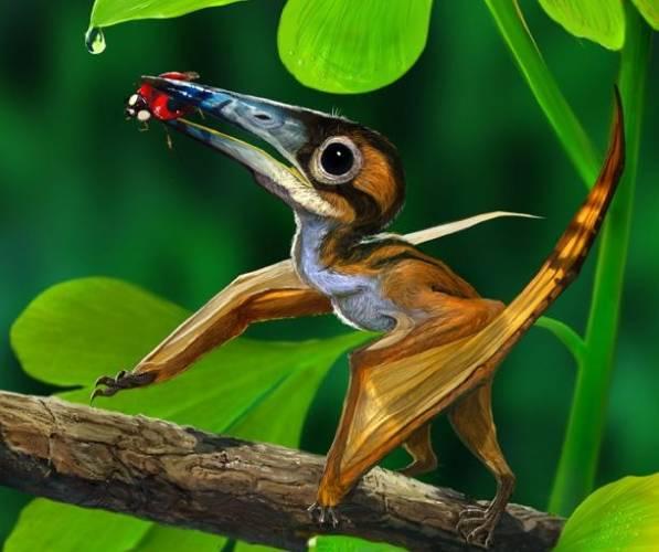 Podle čínských paleontologů se obrovský pterodaktyl pravděpodobně vyvinul z drobných stromových předků.