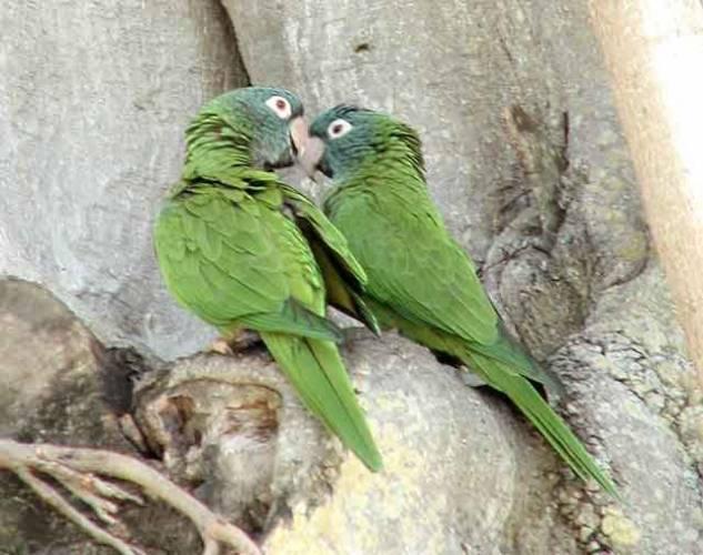 Ptáci –se vyvinuli z plazů asi před 140 miliony roky. O cca 80 milionů let později obývala ptačí svět většina druhů a čeledí, které známe dnes. Reprezentují více než 9000 pestrobarevných druhů; převažují pěvci ( 5 300 druhů). Mají však mnoho společného.