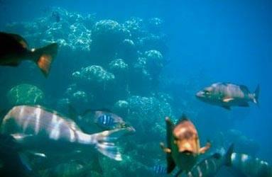 Mořské korálové útesy jsou často přirovnávány k tropickým deštným pralesům, neboť s nimi mají jedno společné - žije v nich obrovské množství různých organismů. Mořští biologové vydávají první svědectví z rozsáhlého zkoumání korálových útesů u pobřeží australského Queenslandu.
