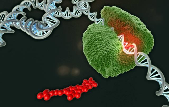Všechny živé organismy na planetě Zemi mají všechny svoje vlastnosti zakódované v biologické molekule, která byla pojmenována jako deoxyribonukleová kyselina. Ve skutečnosti plán výstavby organismu určují pouze čtyři chemické sloučeniny nazvané adenin, cytosin, thymin a guanin.
