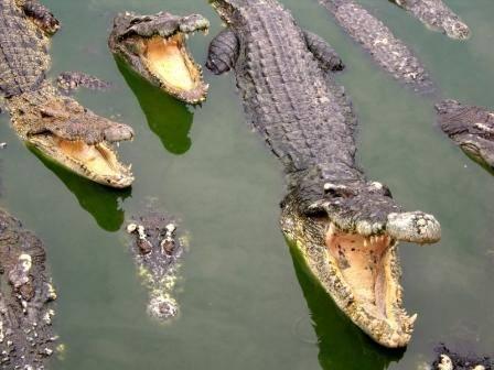 Naši předkové nebyli jen lovci, ale běžně se stávali i kořistí. Kosti ze dvou nejslavnějších afrických lokalit nálezů fosilních hominidů, keňských Olduvai Gorge a Koobi Fora ukazují, že naši předkové byli ohrožováni pořádně silnými predátory – obrovskými krokodýly!