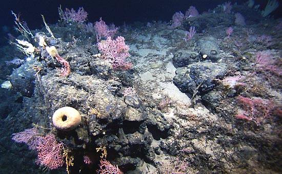 Drobouncí živočichové z kmene žahavců, koráli, jsou neúnavnými pracanty. V teplých a mělkých mořích celého světa si budují na svou ochranu schránky, nichž se během desítek až stovek let stanou korálové útesy či ostrovy. Málokdo si však dokáže představit, že korály najdeme i v království tmy a chladu, stovky metrů pod mořskou hladinou.