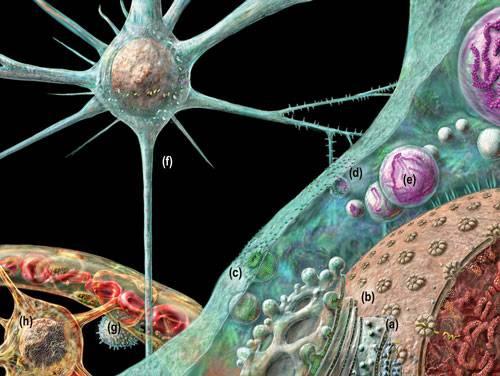 Ze všech nevítaných hostů v našem organismu jsou priony nejtužšími protivníky. Na rozdíl od všech jiných patogenů neobsahují DNA – jsou to čisté bílkoviny a to bílkoviny velmi houževnaté. Nedávná studie amerických vědců ukázala, že proti prionům lze účinně bojovat pomocí jednoho z běžných půdních minerálů.