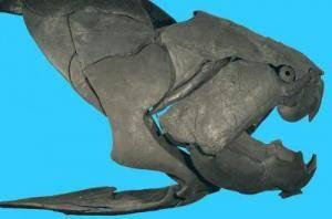 Skládanka, kterou dávají dohromady svými nálezy paleontologové, nebude nikdy úplná. Jakýkoliv další kamínek, který by napomohl zpřesnit obrysy evoluční cesty, která nakonec doklopýtala až k dnešním organismům včetně lidí, je proto vždy vítanou novinkou. Švédský vědec nedávné době popsal  starodávného předka čelistnatých obratlovců nalezeného v britském Herefordshire.