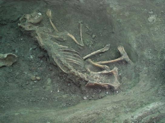 Ačkoliv se křesťanské náboženství stalo státním náboženstvím v Uhrách okolo roku 1000, pohanským zvykům tím zdaleka  neodzvonilo. Dokládá to mimo jiné řada koster rituálně obětovaných psů, nalezená nedávno při kopání základů obytných domů na předměstí Budapešti.