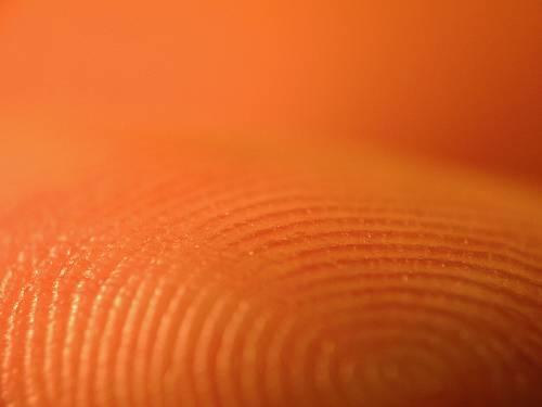 Kriminalisté z daktyloskopického cechu se z papilárních linií na lidských prstech  radují, neboť jim už po léta napomáhají identifikovat podezřelé. Příroda nám je však jistě nenadělila, aby udělala radost lovcům zločinců. Ale proč vlastně?