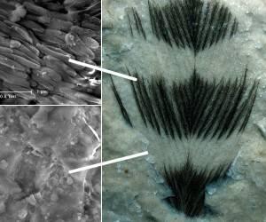 Paleontologové, kteří s mravenčí pílí analyzují fosilní zbytky dávných organismů, si už zvykli na ledasjaká překvapení. Že však při zkoumání  peří třetihorních ptáků odhalí jeho barvu,  nečekal nejspíš  žádný z nich.