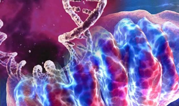 Věk žen-prvorodiček se ve světě neustále zvyšuje a s tím narůstá i vysoký počet defektů u dětí, narozených starším ženám. Většina těchto problémů vyplývá z degradace cytoplasmy, která obaluje jádro vajíčka. Japonští vědci si hrají tak trochu na bohy a pustili se do opravování ženských vajíček.