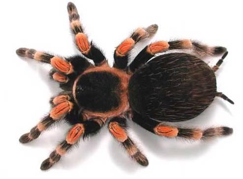 V mnoha oblastech lidské činnosti je důležité, aby se na nejrůznější povrchy pokud možno nechytala žádná voda. Vědci z univerzity v Gainesville na Floridě se inspirovali u pavouků a vyrobili materiál, po němž steče kapka vody stejně dobře jako po pavoučím těle.